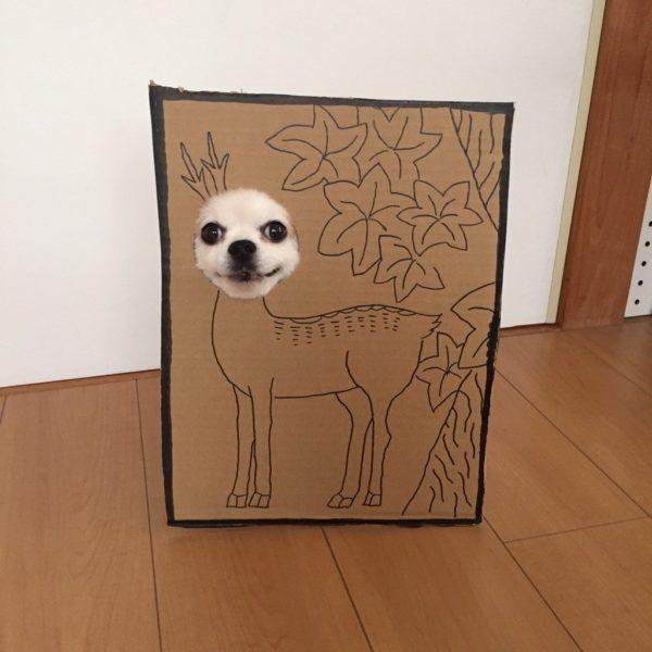 danborudog-6