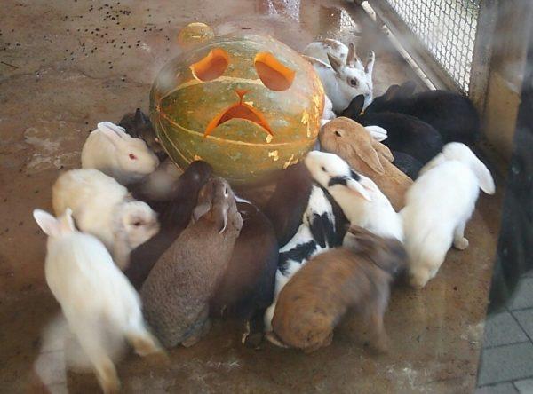 rabbit-pumpkin-1