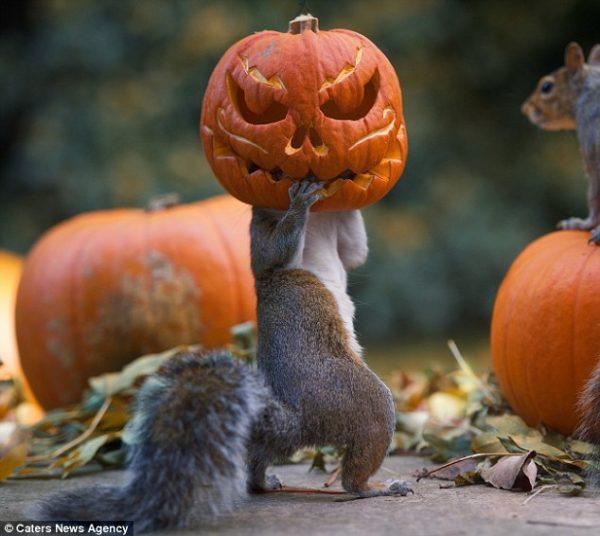 rabbit-pumpkin-10