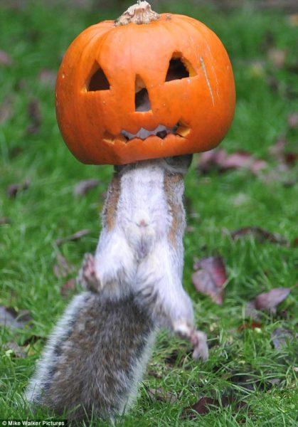 rabbit-pumpkin-2