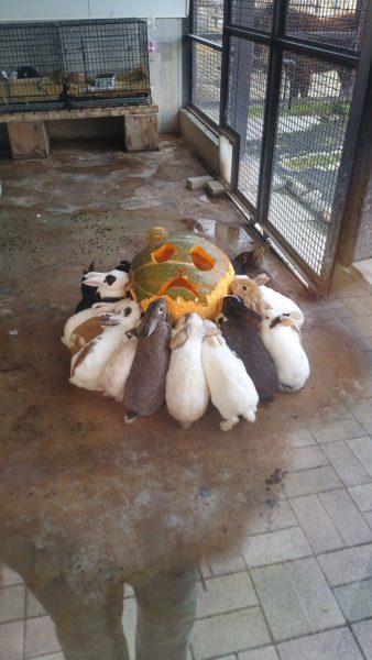 rabbit-pumpkin-3