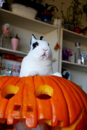 rabbit-pumpkin-6