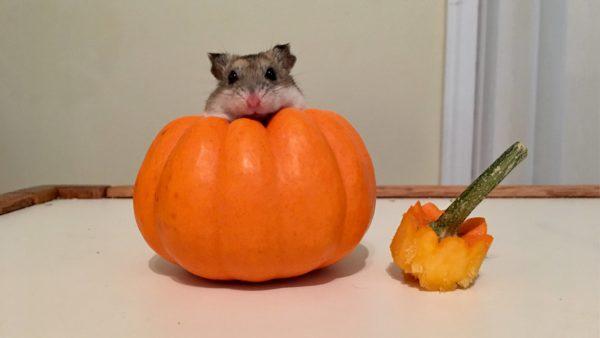 rabbit-pumpkin-8