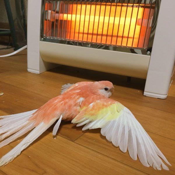 stovebird-2