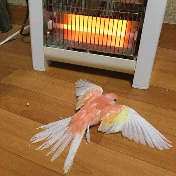 stovebird-3