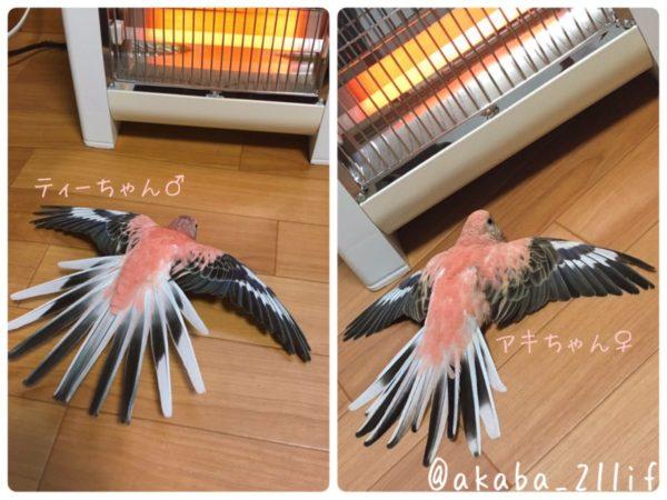 stovebird-7
