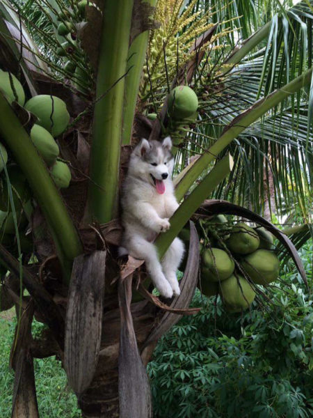 treedog-1