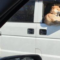 ふと横を見たらトラックの運ちゃ...