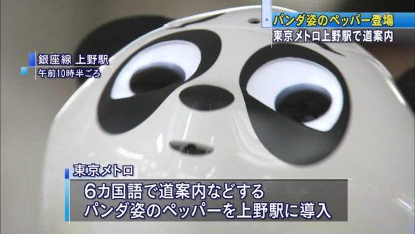 pandapepper-7