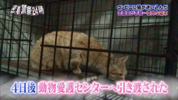 police-cat-1