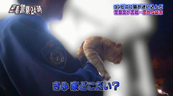 police-cat-4