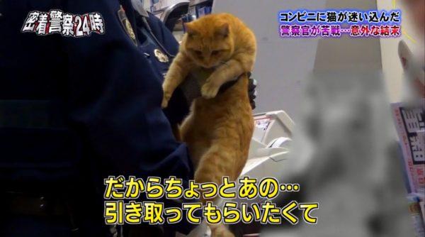 police-cat-7