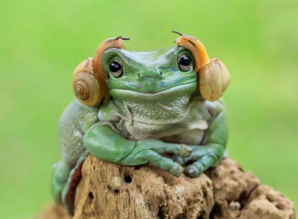tantoyensen-frog-1