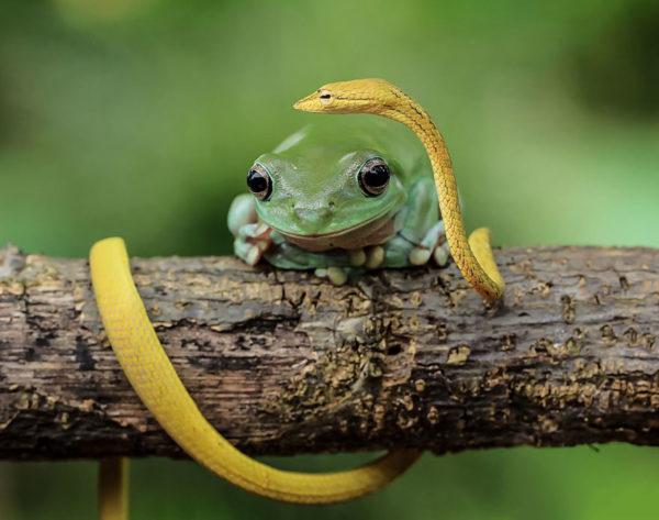 tantoyensen-frog-10