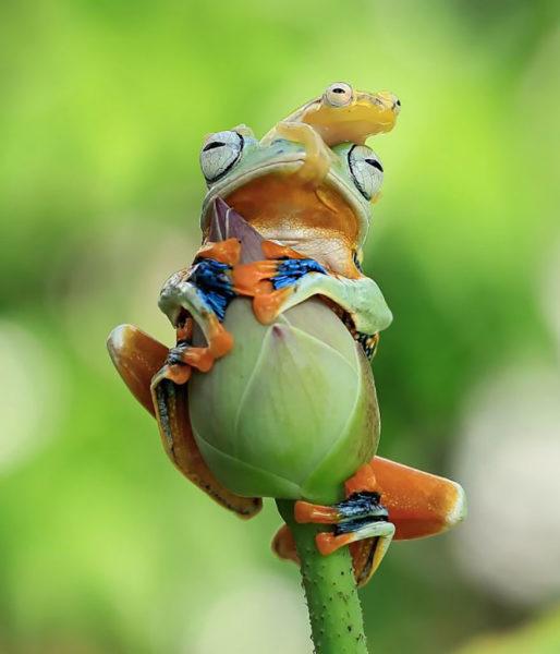 tantoyensen-frog-13