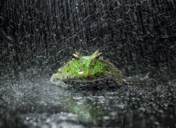 tantoyensen-frog-15