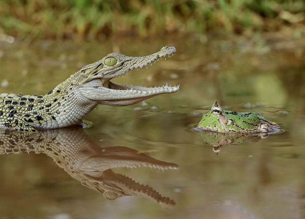 tantoyensen-frog-18