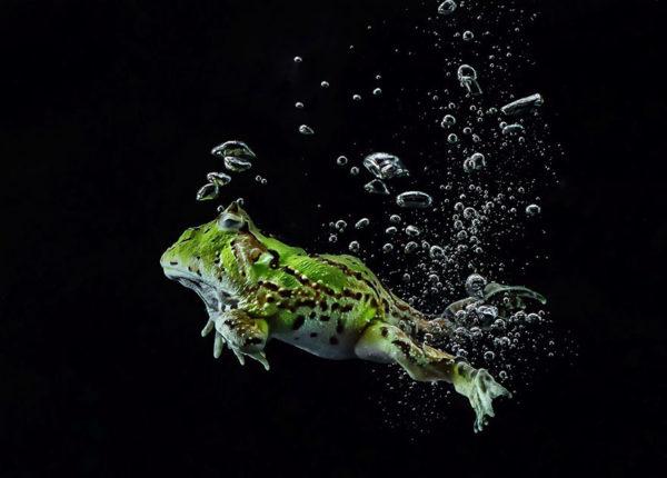 tantoyensen-frog-19