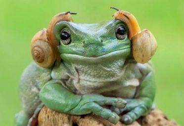 tantoyensen-frog