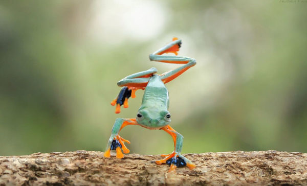 tantoyensen-frog-4