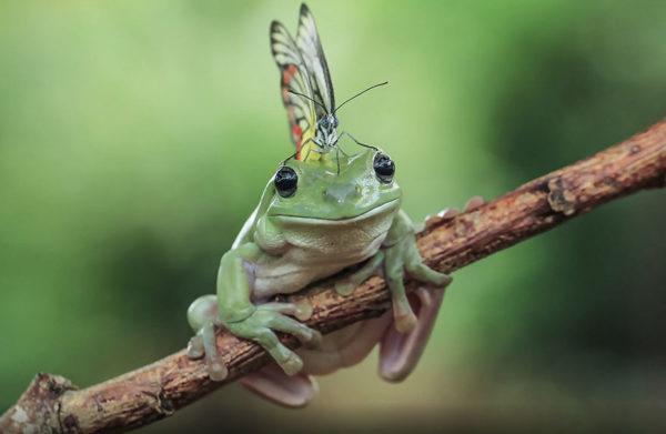 tantoyensen-frog-5
