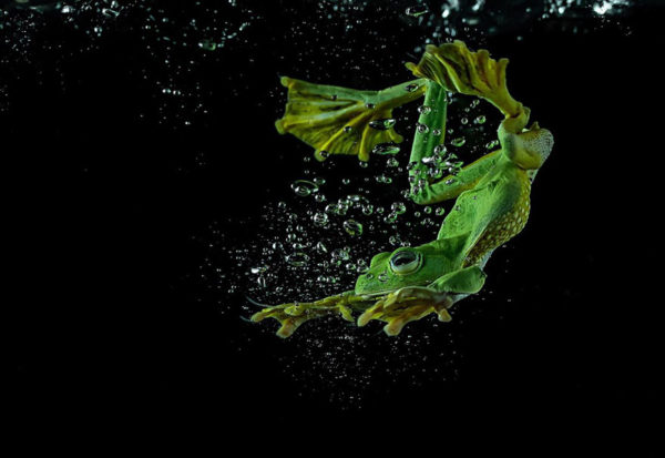 tantoyensen-frog-6