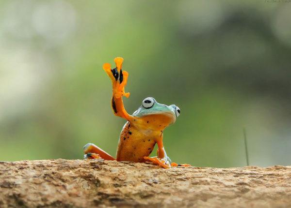 tantoyensen-frog-7