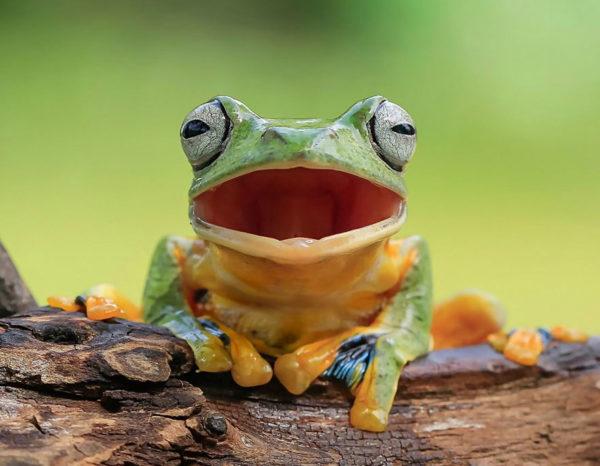 tantoyensen-frog-9