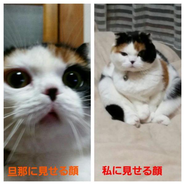 cat-aikyo (3)