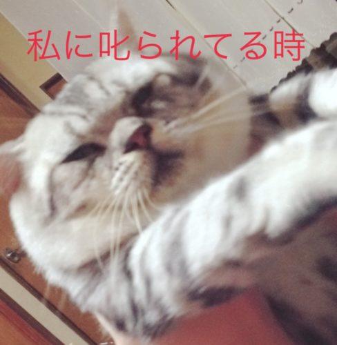 cat-aikyo (4)