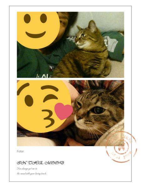 cat-aikyo (7)