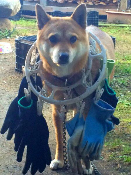 dogwear (11)
