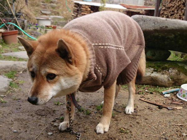 dogwear (2)