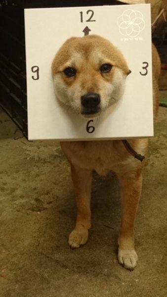 dogwear (4)
