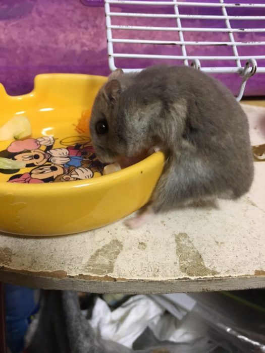 hamster-niboshi-8