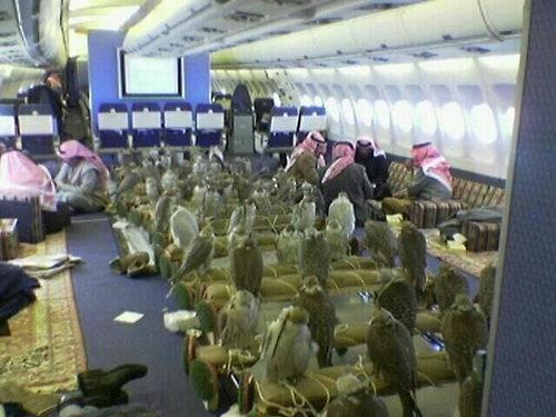 saudihawks (2)