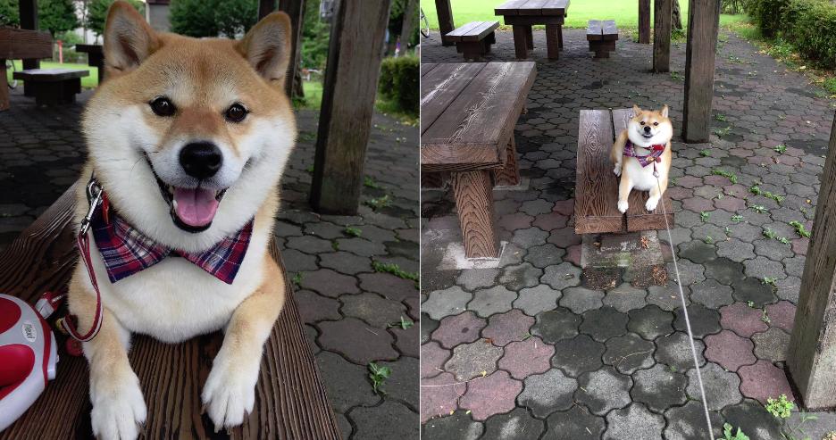 画像 柴犬ハナちゃん「あたしゃこの公園が気に入ったから帰らないよ」